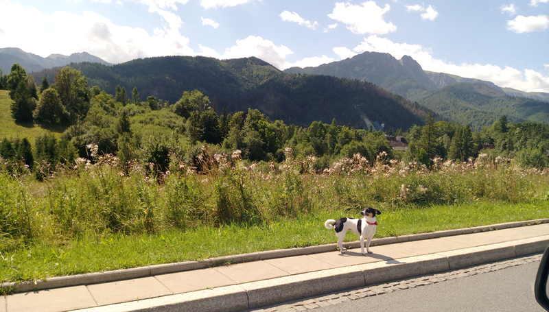 wirtualna asystentka na wakacjach - droga do Zakopanego